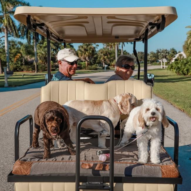 driving the dogs Punta Gorda
