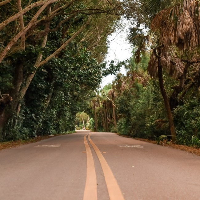 Canopy road in Southwest Florida