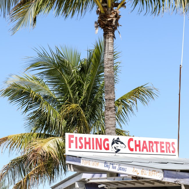 Sign for fishing charters & palm trees
